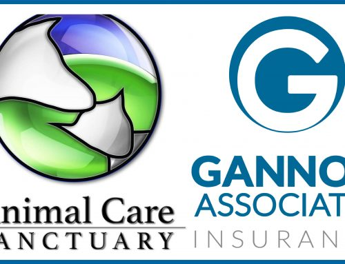 Gannon and Animal Care Sanctuary team up for Athens Street Fair!